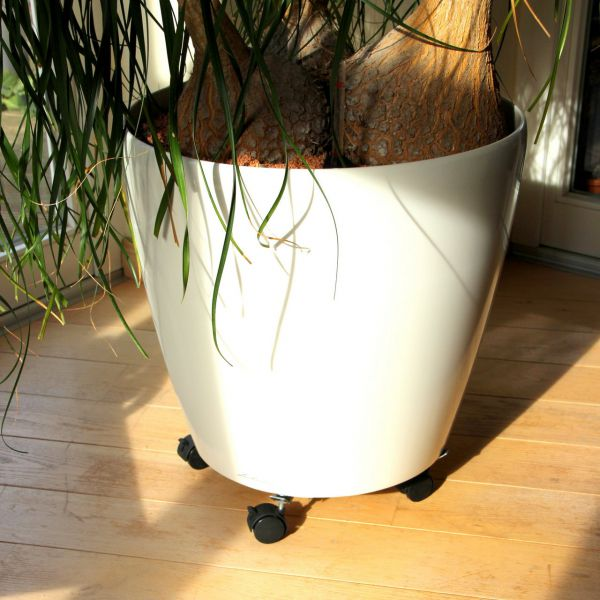 Pflanzenroller Trollirolly, belastbar bis 100 kg