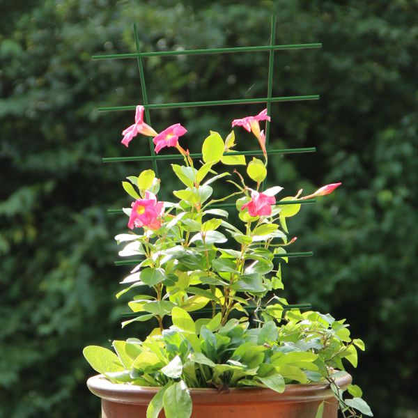 Kunststoff-Blumenstütze Rankhilfe, grün