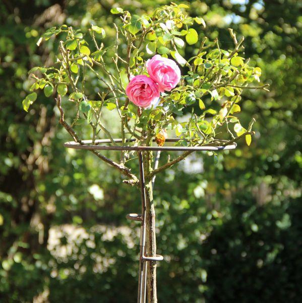 Rosenständer Mainau, unbehandelt