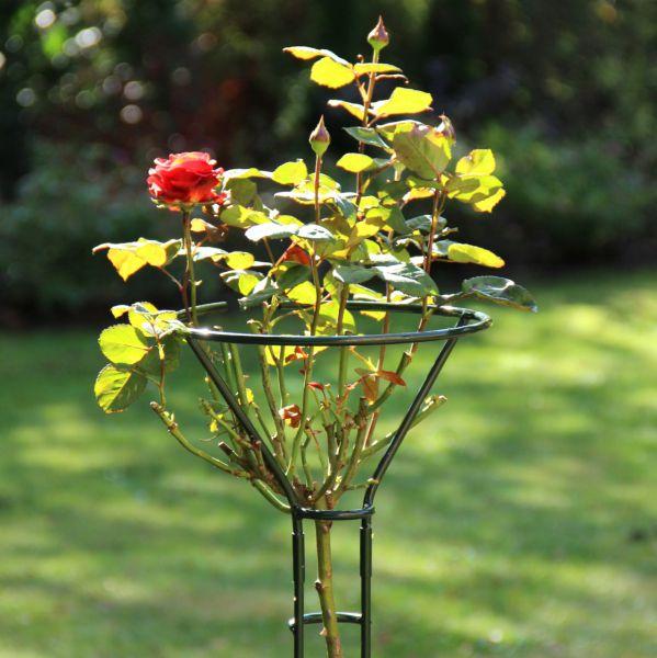Rosenständer Mainau, grün
