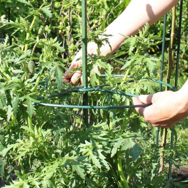 Pflanzenring Kunststoff, 3 Stück grün