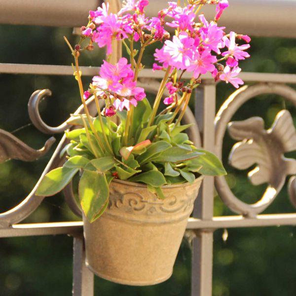 Balkon-Hängetopf Felipa, braun-antik