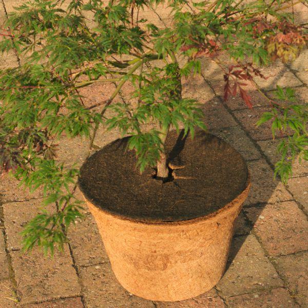 Kokosmatte rund Winterschutz für Kübelpflanzen  mit Loch dunkelbraun