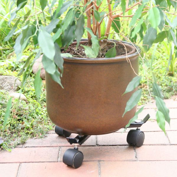 Pflanzenroller Trollirolly, belastbar bis 60 kg