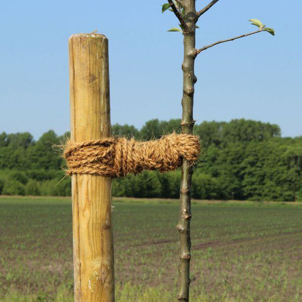 Kokoskordel Baumbinder 15 m, natur