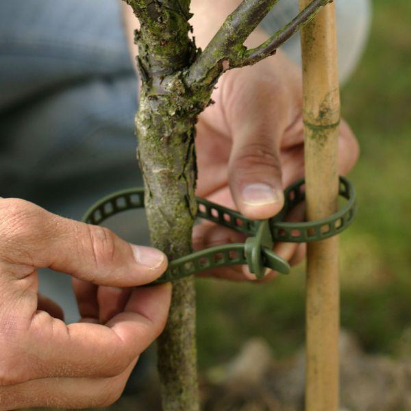Pflanzenbinder Treefix klein, Blumen